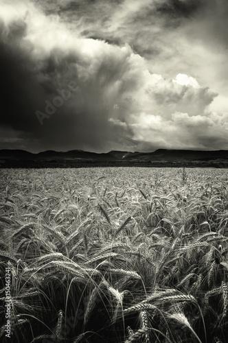 dramatyczne-chmury-burzowe-niebo-nad-pole-pszenicy-czarny-i