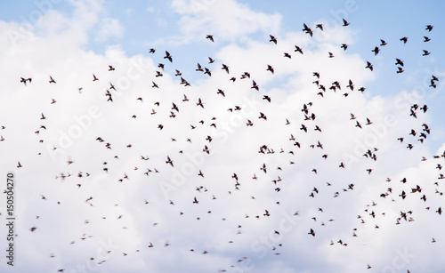 birds flying and abstract sky ,spring background abstract happy background,freed Canvas Print