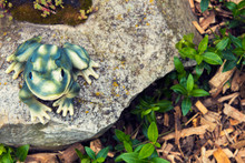 Garden Frog Decorating Rock Garden With Sucullents And Mulch