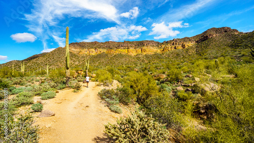 Staande foto Droogte Woman on a hike on the hiking trail surrounded by Saguaro and other Cacti to the Wind Cave in Usery Mountain in Tonto National Forest near Phoenix Arizona