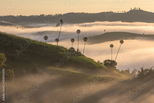 Deurstickers Toscane Morning Mist and Sunrise in Phetchabun Thailand