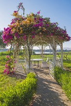 Metal Pagoda Pavilion In Rural Garden Setting With Bourgainvillea