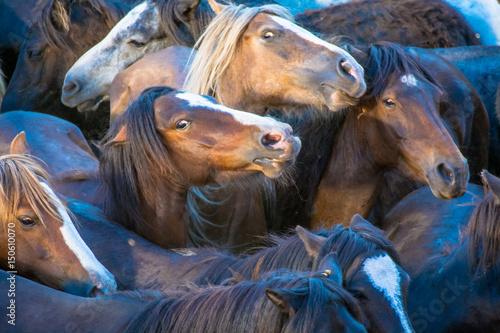 Fotografie, Obraz  Full Frame Shot Of Horse Herd