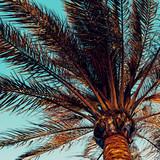 Palmowy tło. Minimalny styl - 150622497