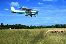 Light General Aviation Plane On Final Over Sheeps