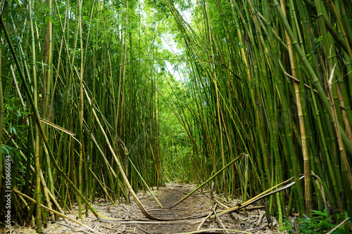 Foto op Plexiglas Bamboe Path through a tall bamboo forrest on the Road to Hana on Maui, Hawaii