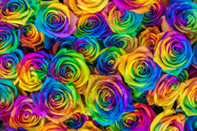 Fresh Beautiful Vibrant Multicolor Roses Flowers For Floral Background. Rainbow Colored Unique And Special Roses. Top View, Close Up