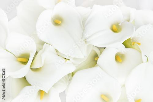 Fototapeta Calla lilies