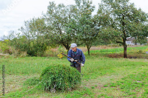 Old man mowing down grass with scythe Tapéta, Fotótapéta