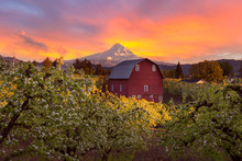 Sunset Over Mt Hood And Red Barn In Hood River Oregon