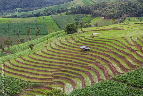 Foto op Canvas Pistache Terraced Rice Field with Hut and Mountain Background , Chiang Mai in Thailand ,Blur Background