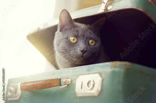 Foto op Aluminium Kat game of travel/ A blurred silhouette of a curious cat peeking out of an old suitcase