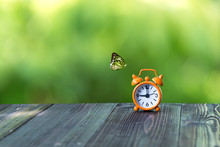 Alarm Clock With Butterfly On ...