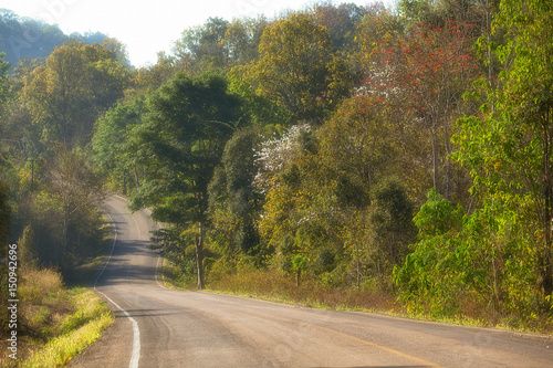 Fototapety, obrazy: Road and trees in Thailand