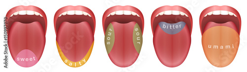 Tongue with five taste buds areas - sweet, salty, sour, bitter and umami Fototapete