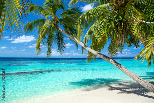 Staande foto Strand coco palms on tropical paradise beach with turquoise blue water and blue sky