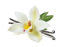 Vanilla Flower Sticks And Leav...