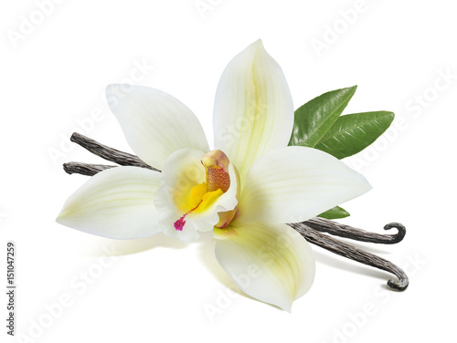 Fotomural  Vanilla flower sticks and leaves isolated