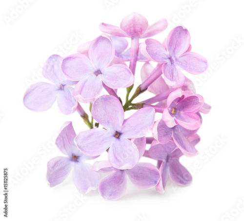 Photo sur Toile Lilac Lillac flower
