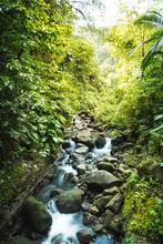 Torrent En Forêt - Guadeloupe