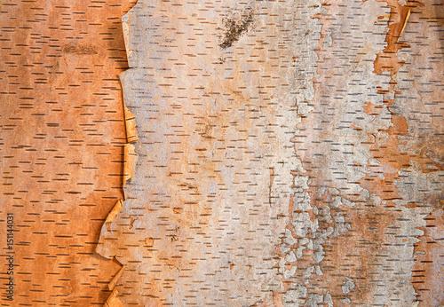 Birch tree bark texture background