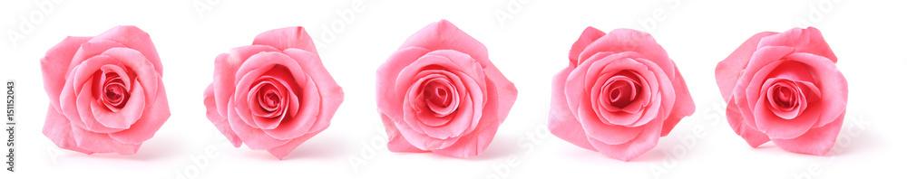 Fototapety, obrazy: pink roses