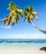 cocotiers penchés sur plage de rêve des Seychelles