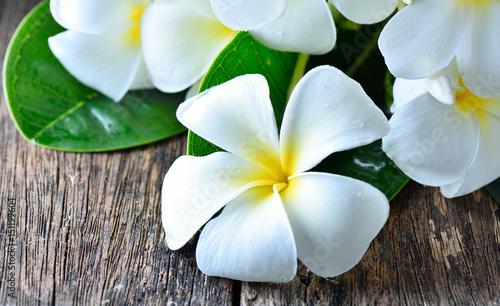 Keuken foto achterwand Frangipani white plumeria frangipani on wooden background