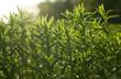 Wild field of grass on sunset, soft sun rays, warm toning