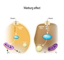 Glycolysis. Warburg Effect