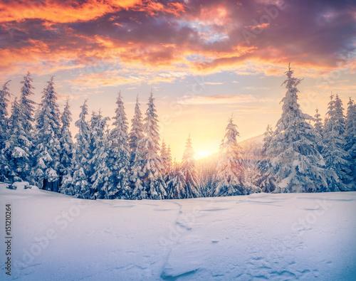 wspaniala-bozenarodzeniowa-scena-w-halnym-lesie