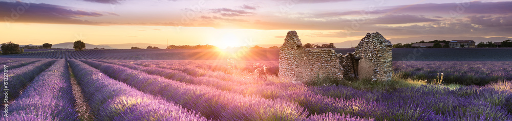Fototapety, obrazy: PANORAMIC LAVENDER IN SOUTH OF FRANCE