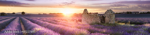 Poster Lavendel PANORAMIC LAVENDER IN SOUTH OF FRANCE