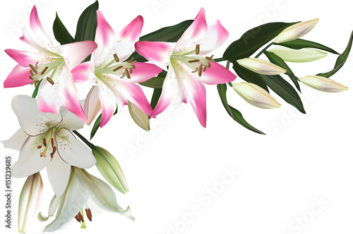 isolated corner from pink and white lilies © Alexander Potapov