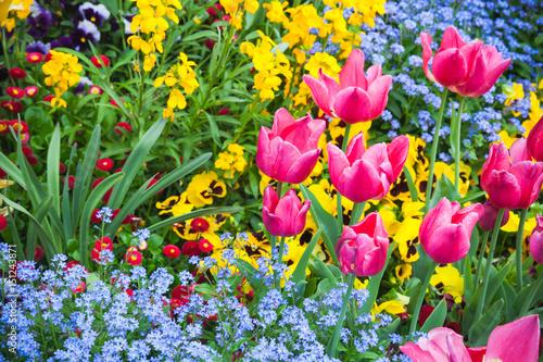 Valokuvatapetti Colorful decorative flowers, garden flowerbed