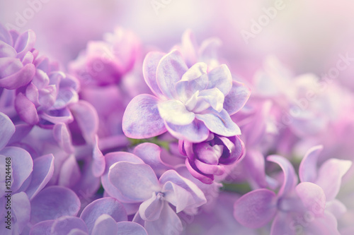 Staande foto Lilac Lilac flowers bunch violet art design background