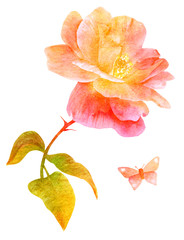 Fototapeta Vintage Watercolor pink rose and butterfly, isolated, golden toned