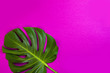 canvas print picture Green tropical palm leaf on pink colored background. Minimal flat lay style. Overhead, top view, copy space