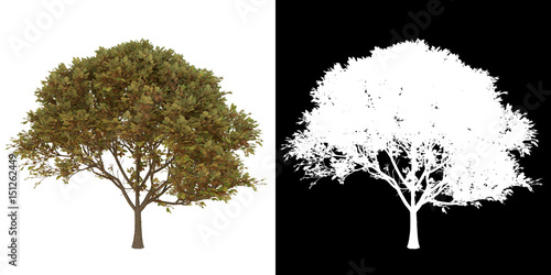 Tree isolate on white with alpha channel Canvas Print