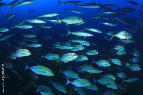 Tuna fish in ocean Canvas Print