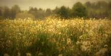 Suisse Rurale...entre Prairie ...