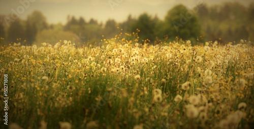 suisse rurale...entre prairie et forêt Fototapet