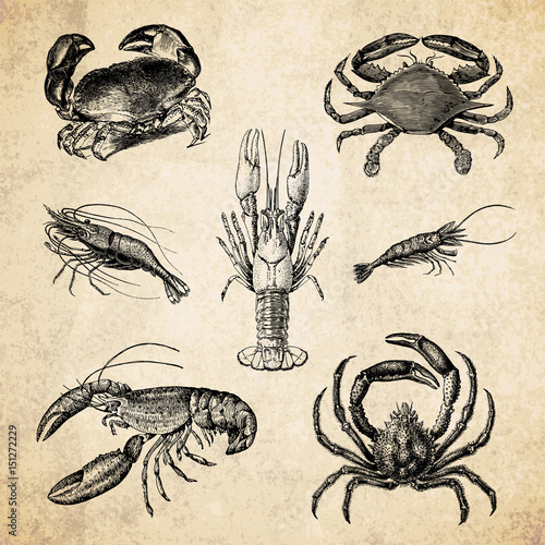 Crustacean - Vintage Illustrations Canvas Print