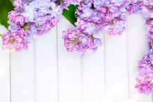 Lilac Flowers Bunch On White Planks Wood Background