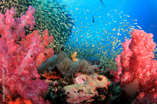 Photo Stands Coral reefs Coral reef and fish underwater