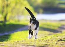 Playful Cat Is Running On Gree...