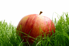 Fallen Fresh Red Apple In The ...