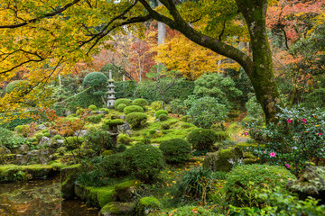 FototapetaJapanese garden with autuman maple tree