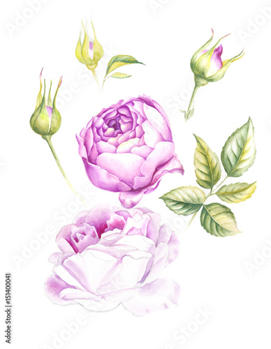 Set Of Vintage Roses Blooming Watercolor Botanical Illustration Of