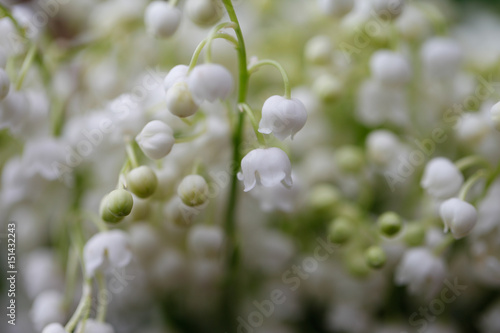 Foto op Aluminium Lelietje van dalen Lily of the valley